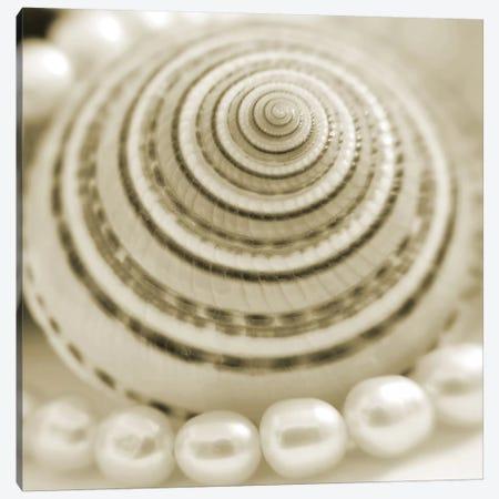 Shells and Pearls 1 Canvas Print #ICS431} by PhotoINC Studio Canvas Art Print