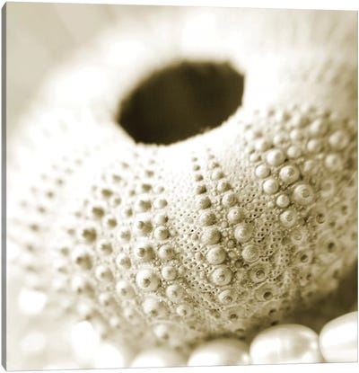 Shells and Pearls 2 Canvas Art Print