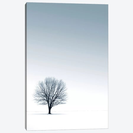 Tree in Winterscape Canvas Print #ICS434} by PhotoINC Studio Canvas Wall Art