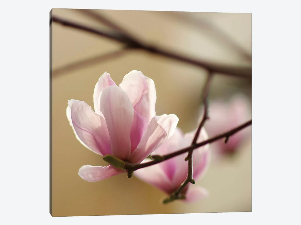 Tulip Tree 1 by PhotoINC Studio 1-piece Canvas Wall Art