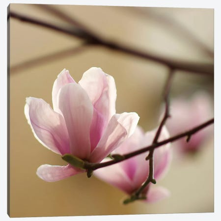Tulip Tree 1 3-Piece Canvas #ICS436} by PhotoINC Studio Canvas Wall Art