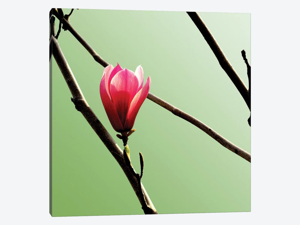 Tulip Tree 3 by PhotoINC Studio 1-piece Art Print
