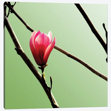 Tulip Tree 3 3-Piece Canvas #ICS437} by PhotoINC Studio Canvas Art