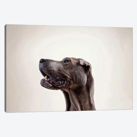Pelei in Profile Canvas Print #ICS461} by Susan Sabo Canvas Wall Art