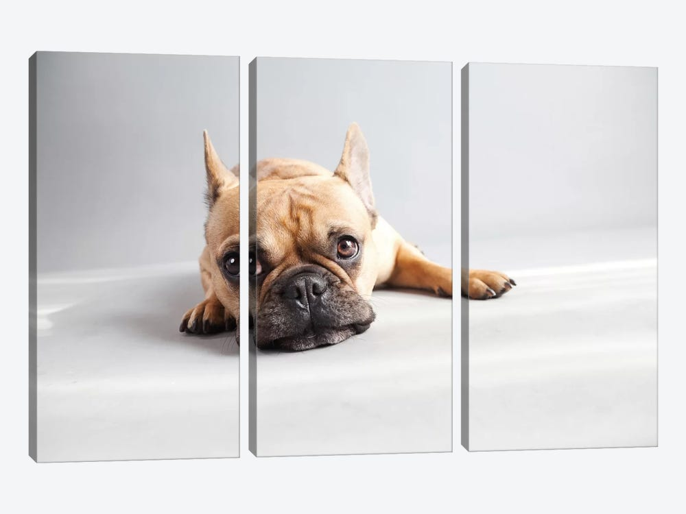 Sad Frenchie by Susan Sabo 3-piece Canvas Art