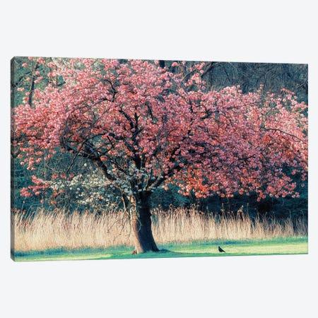 Me and My Tree Canvas Print #ICS476} by Lars van de Goor Canvas Artwork