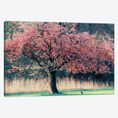 Me and My Tree Canvas Print #ICS476} by Lars van de Goor Canvas Artwork