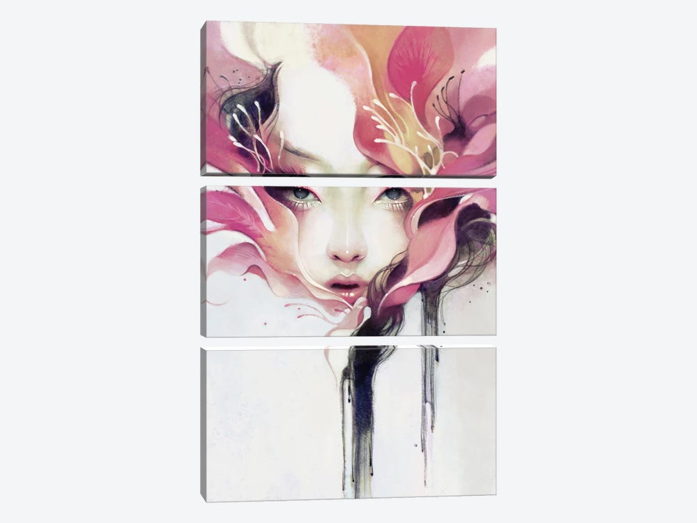 Bauhinia by Anna Dittmann 3-piece Canvas Art Print