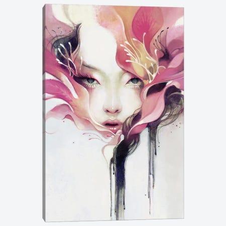 Bauhinia Canvas Print #ICS605} by Anna Dittmann Art Print