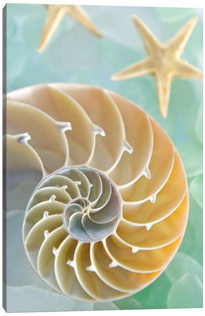 Seaglass 2 Canvas Art Print