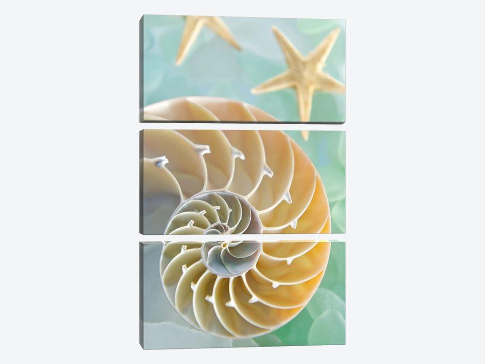 Seaglass 2 by Alan Blaustein 3-piece Canvas Art