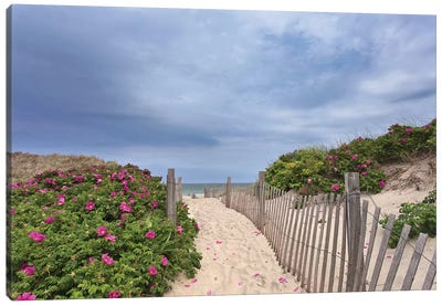 Rose Path Canvas Art Print