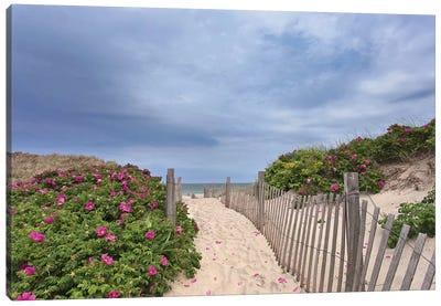 Rose Path Canvas Art Print