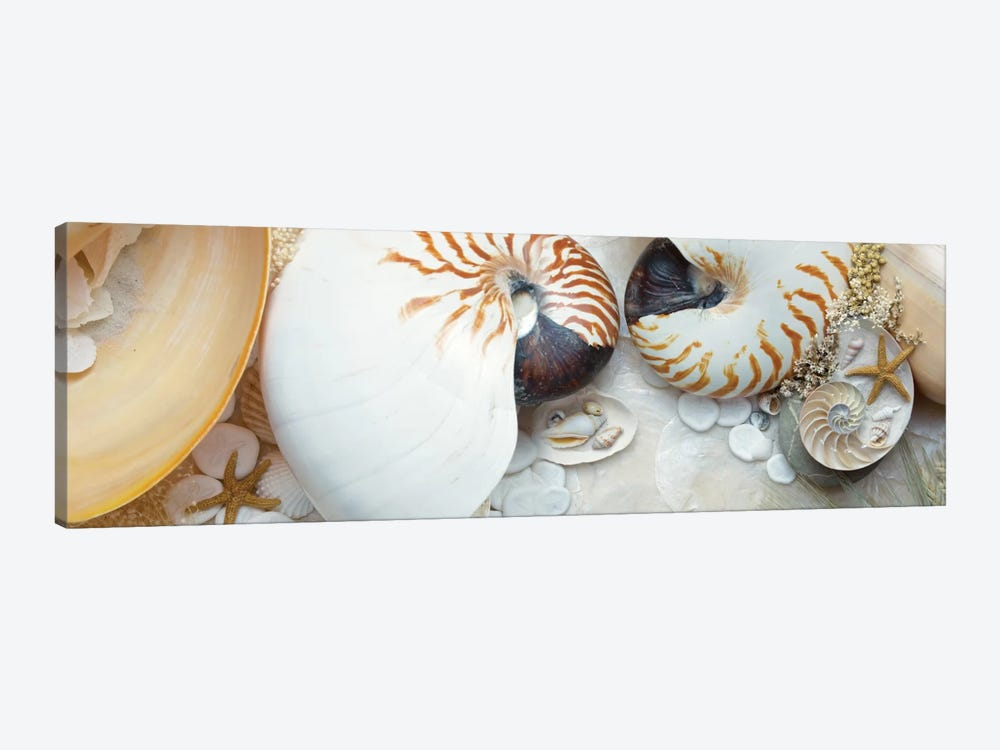 Island Tide Pool VIII by Alan Blaustein 1-piece Canvas Artwork