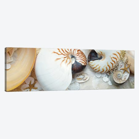 Island Tide Pool VIII Canvas Print #ICS628} by Alan Blaustein Canvas Art