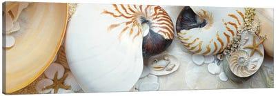 Island Tide Pool VIII Canvas Art Print