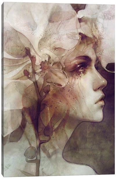 Petal Canvas Art Print