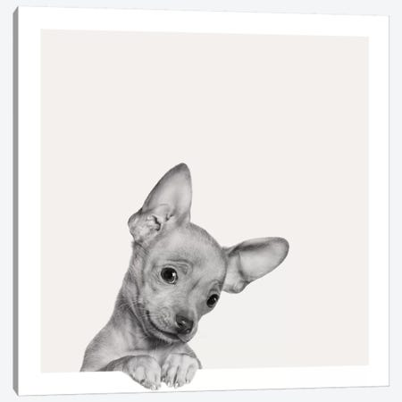 Sweet Chihuahua Canvas Print #ICS634} by Jon Bertelli Canvas Art