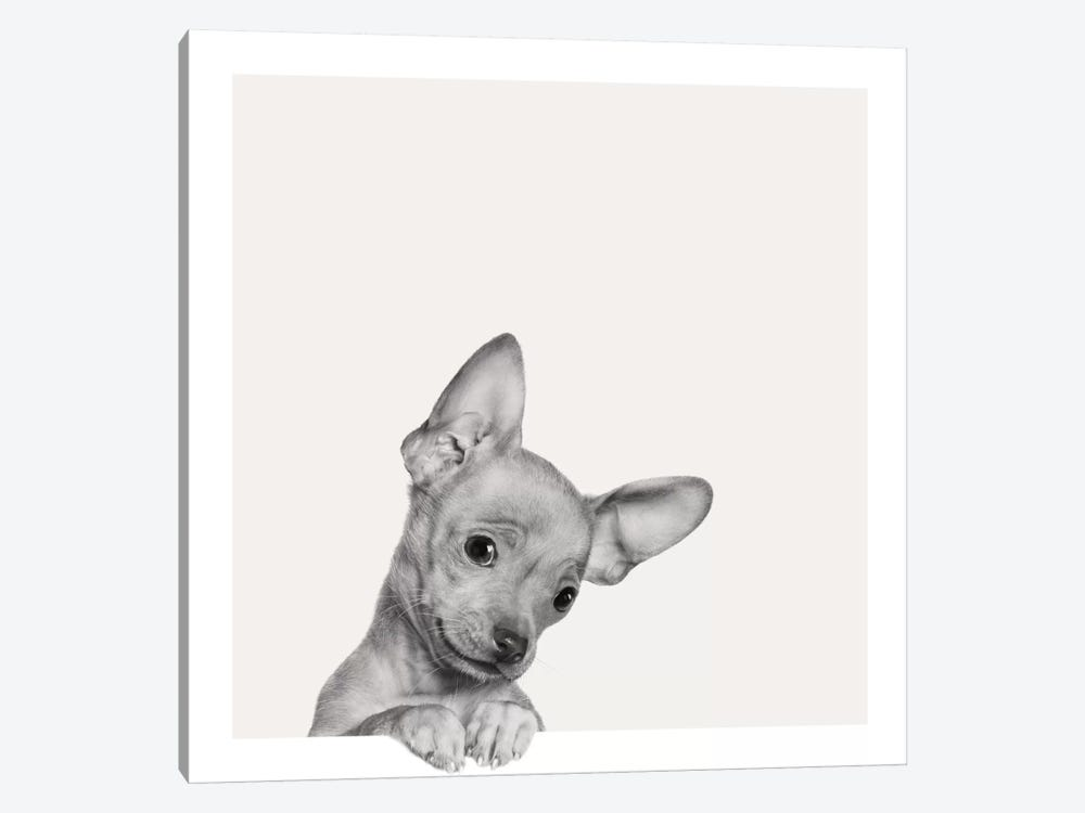 Sweet Chihuahua by Jon Bertelli 1-piece Art Print