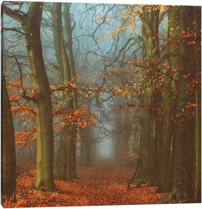 Path Of The Mystics Canvas Art Print
