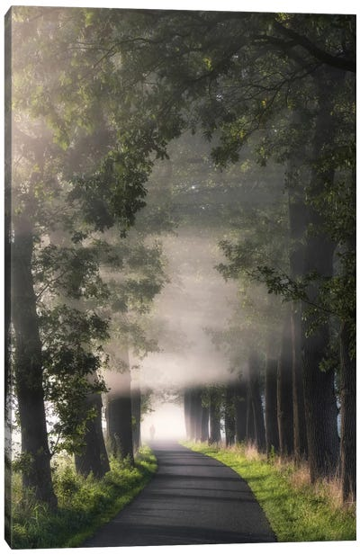 Rays Of Fog Canvas Art Print