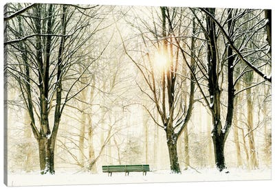 Too Cold To Sit Canvas Art Print