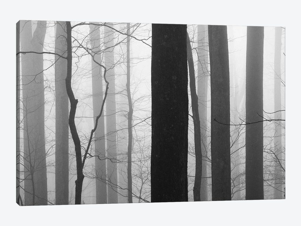 Forest Code by Nicholas Bell Photography 1-piece Art Print