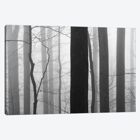 Forest Code Canvas Print #ICS67} by Nicholas Bell Photography Canvas Wall Art