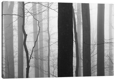 Forest Code Canvas Art Print