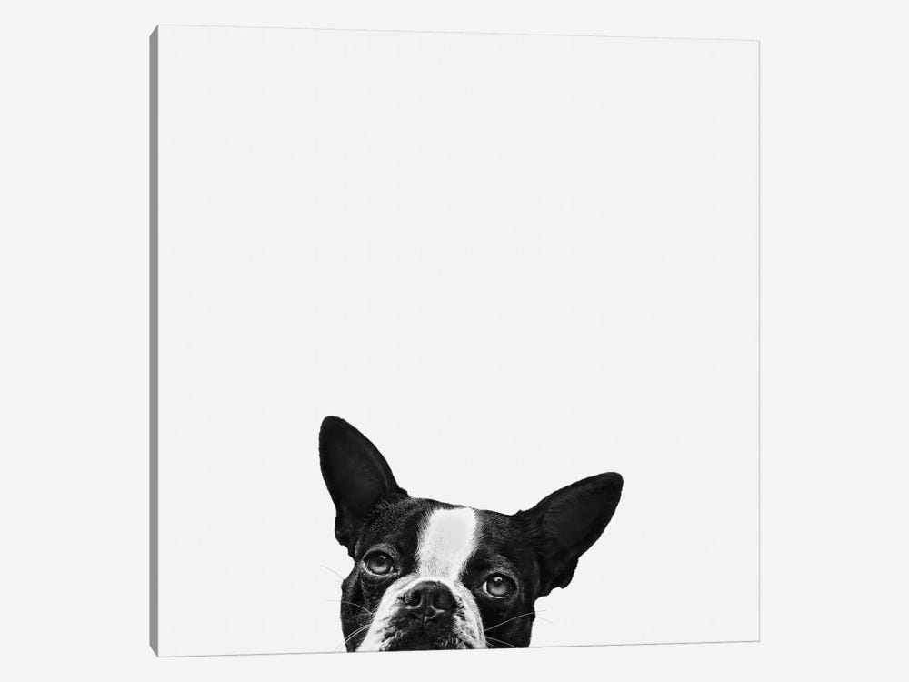 Loyalty by Jon Bertelli 1-piece Canvas Wall Art