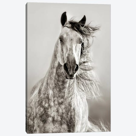 Caballo de Andaluz Canvas Print #ICS725} by Lisa Dearing Canvas Artwork