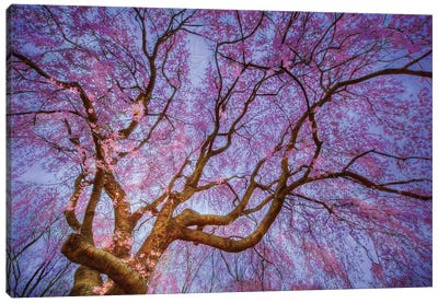 Weeping Cherry Canvas Art Print