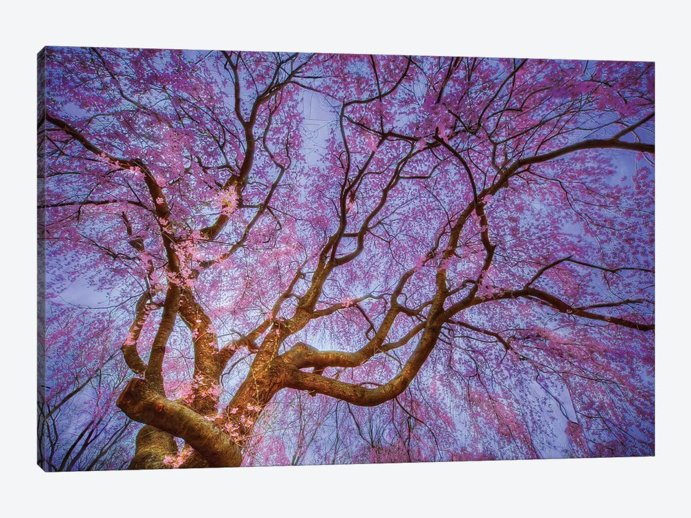 Weeping Cherry by Natalie Mikaels 1-piece Canvas Artwork