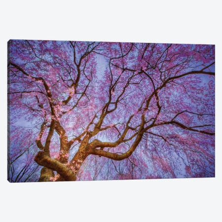 Weeping Cherry Canvas Print #ICS729} by Natalie Mikaels Canvas Print