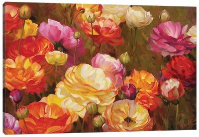 Ranunculus Garden Canvas Print #ICS755