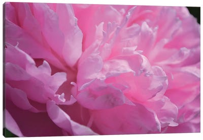 Pastel Peony Canvas Art Print