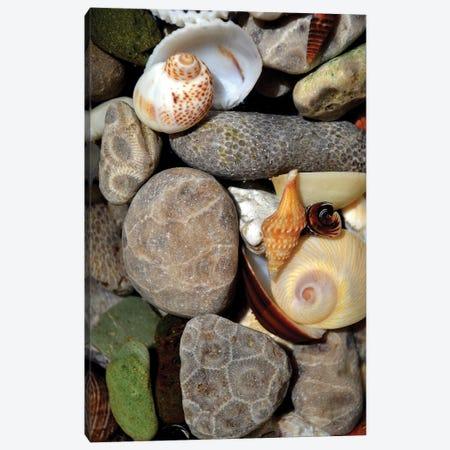 Petoskey Stones II Canvas Print #ICS840} by Michelle Calkins Canvas Art