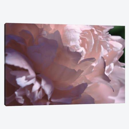 Velvet Peony I Canvas Print #ICS846} by Michelle Calkins Art Print