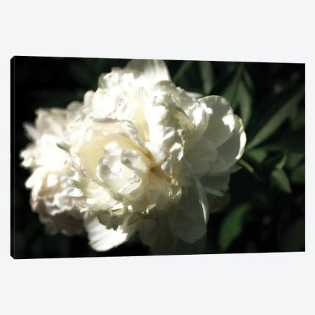 White Peony In Spring Canvas Print #ICS849} by Michelle Calkins Canvas Art