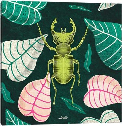 Bug Square I Canvas Art Print