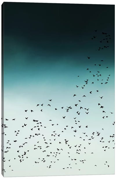 Birds In Flight Canvas Art Print