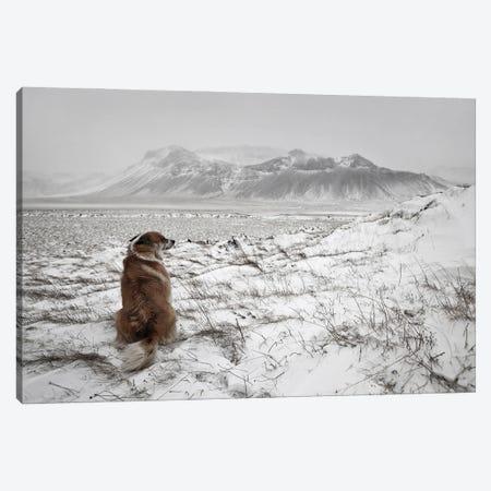 Snowstorm Canvas Print #IGB7} by Bragi Ingibergsson Canvas Print