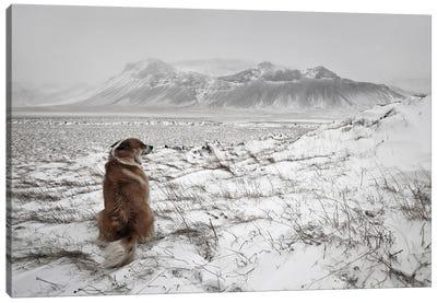 Snowstorm Canvas Art Print