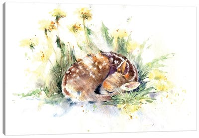 Fawn In Dandelions Canvas Art Print