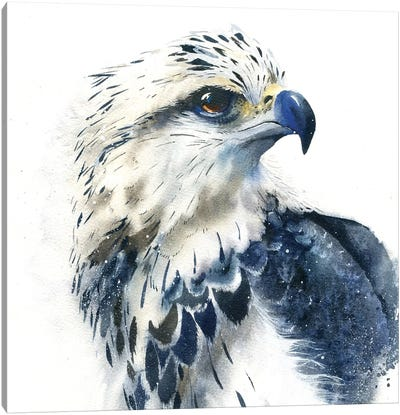 Hawk Canvas Art Print