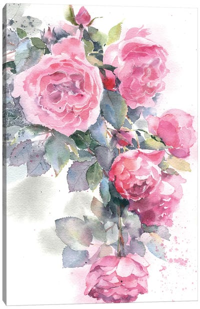 Rose Bush Canvas Art Print