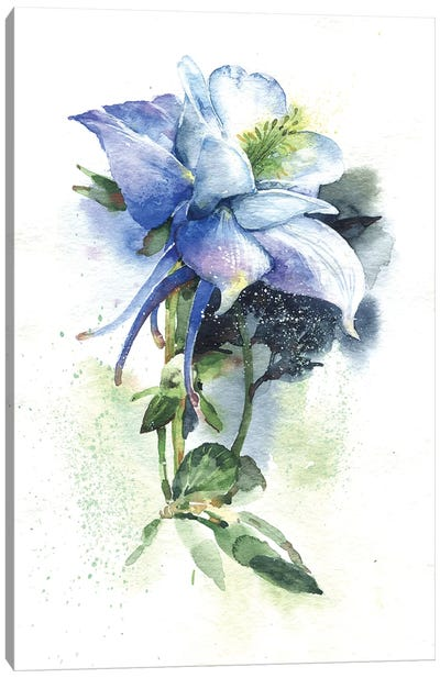 Aquilegia Canvas Art Print