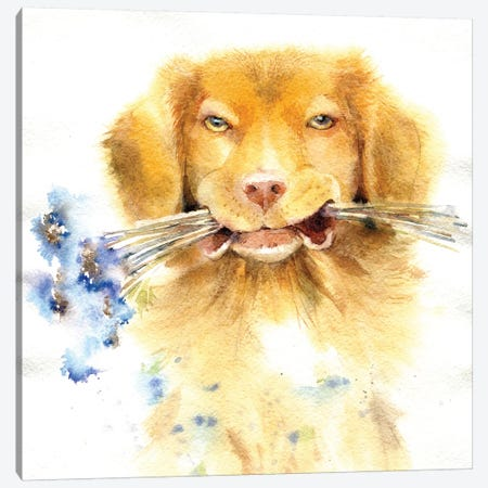 Retriever With Bouquet Canvas Print #IGN43} by Marina Ignatova Art Print