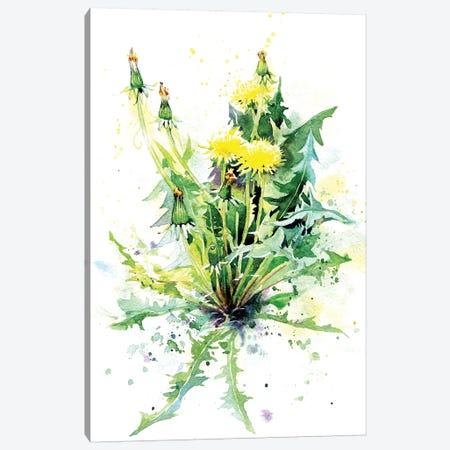 Dandelion Canvas Print #IGN52} by Marina Ignatova Canvas Art