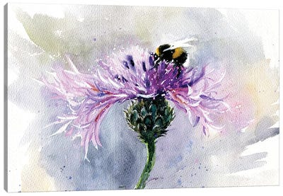 Bumblebee On A Flower Canvas Art Print